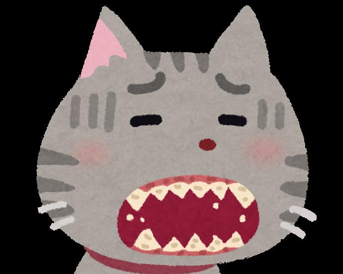 歯周病の猫
